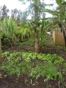 Vegetable gardens at IPI